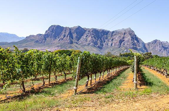 The Stellenbosch Wine Route turns 50!