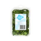Pnp Herbs Parsley Flat Leaf 20g