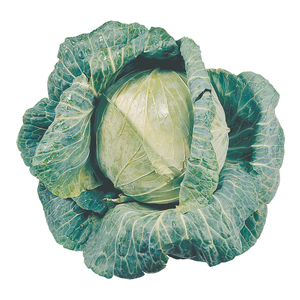 PnP Cabbage