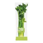 PnP Table Celery Bunch