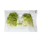 PnP Butter Lettuce