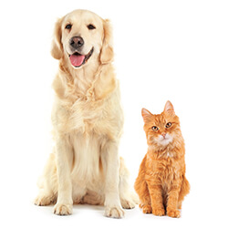 Cat-banner-tile-Pets-250x250px-opt.jpg